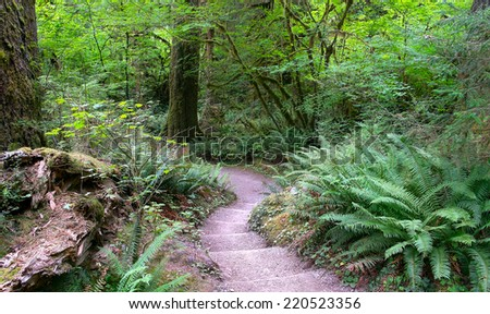Rainforest Trail and Foliage in Olympic National Park Washington State, USA - stock photo