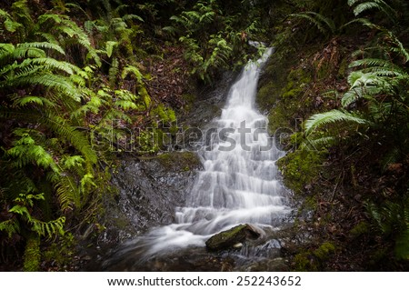 Rainforest Waterfall. A lovely waterfall cascading down the steep rainforest environment in the San Juan Islands of Puget Sound, Washington State, USA. - stock photo
