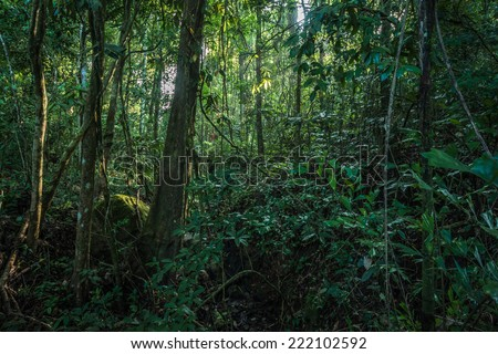 Rainforests of Khao Yai National Park, Thailand - stock photo
