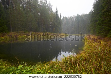 Rainy autumn landscape with pond in the forest