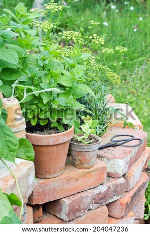 Raised bed with herbs/herbs/garden