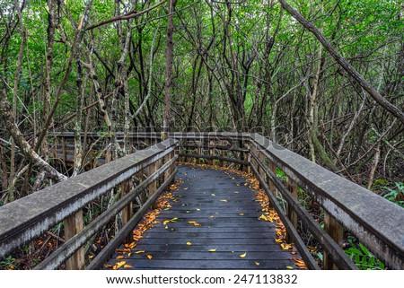 Raised wooden boardwalk through the wetlands of Everglades National Park, Florida - stock photo