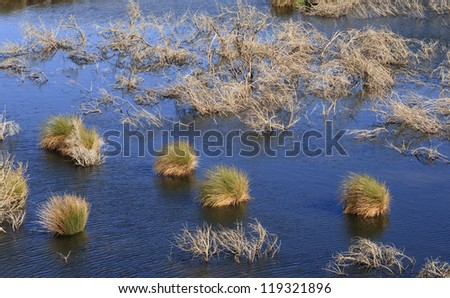 Rakatu Wetlands in New Zealand.These restored wetlands provide an opportunity to view wildlife on the southern island of NZ - stock photo
