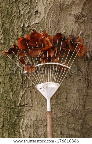 Rake with leaves in autumn - stock photo