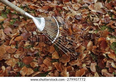 Raking autumn Leaves on grass lawn - stock photo