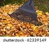 Raking fallen autumn leaves - stock photo