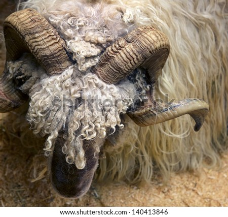 ram close-up - stock photo
