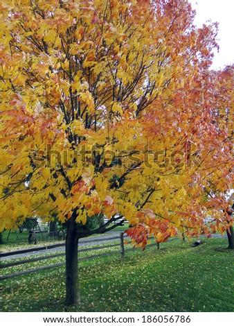 Range of Fall Colors - stock photo