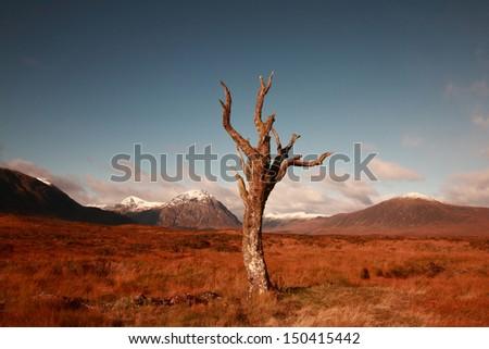 Rannoch Moor famous, now gone, dead tree in Autumn - stock photo