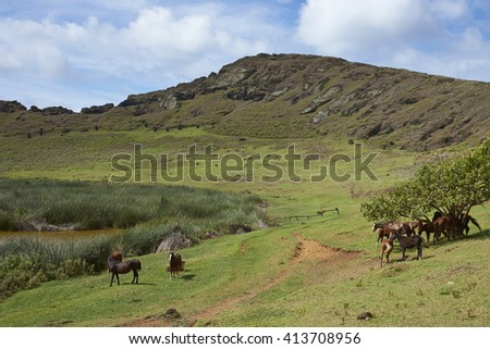 Rano Raraku. Horses grazing around the lake in the crater of the extinct volcano which was the quarry from which the Moai statues of Rapa Nui (Easter Island) were carved. - stock photo