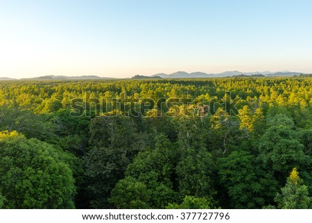 Ranong biosphere reserve, Mangrove forest, Thailand - stock photo