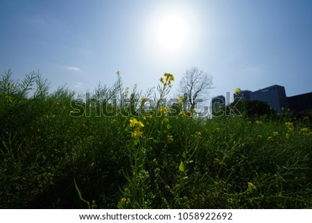 https://thumb9.shutterstock.com/display_pic_with_logo/167494286/1058922692/stock-photo-rape-blossoms-in-a-japanese-garden-1058922692.jpg