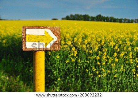 Rape canola as renewable energy? Environment. - stock photo