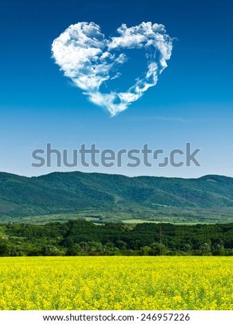 rape field and blue sky - stock photo