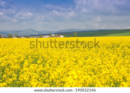 rape field at the sunrise - beautiful landscape conception  - stock photo