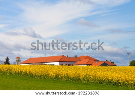 Rape field at the sunrise with houses and a chapel - beautiful landscape conception  - stock photo