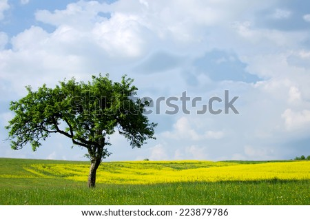 rape fields and trees - stock photo