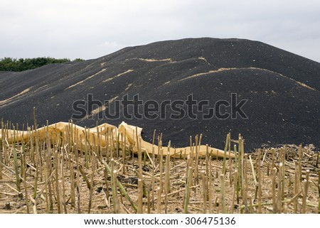 Rape seeds in a large pile on a Danish field. - stock photo
