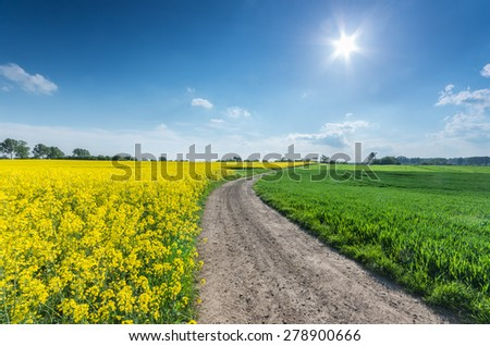 Rapeseed and cereal field divided by a country road on a sunny afternoon