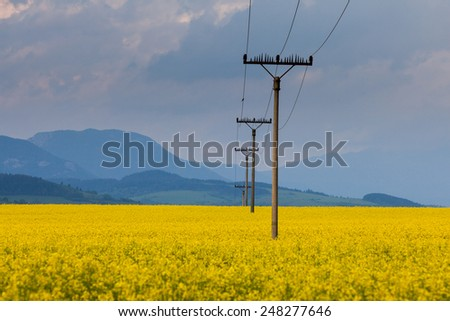 Rapeseed and electrical tower - stock photo