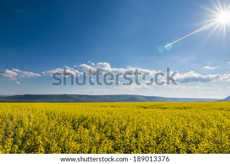 Rapeseed field front of blue sky with sun - stock photo