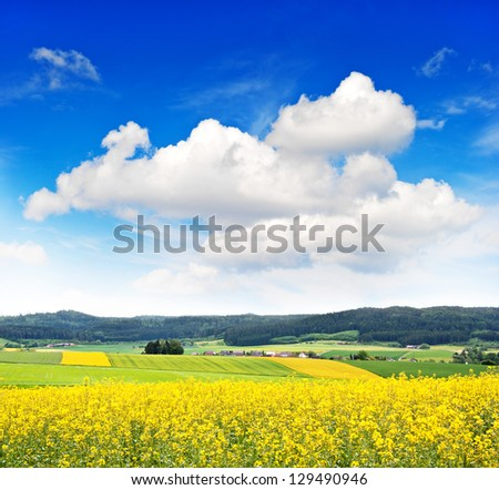 rapeseed field over cloudy blue sky. countryside landscape - stock photo