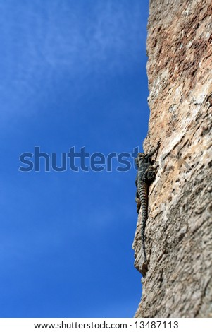 raptile climbing the wall under blue sky
