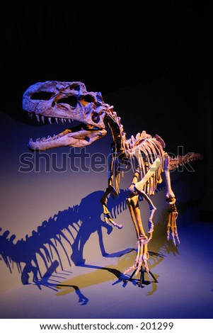 Raptor fossil - stock photo