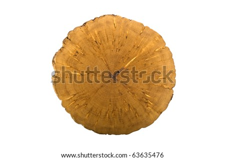 Rare birch breed - stock photo
