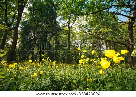 Rare flowers in a sunny forest - stock photo