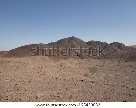 Rare trees in the stone desert Arava - stock photo