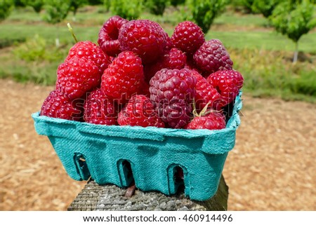 Raspberries inside container from green paper