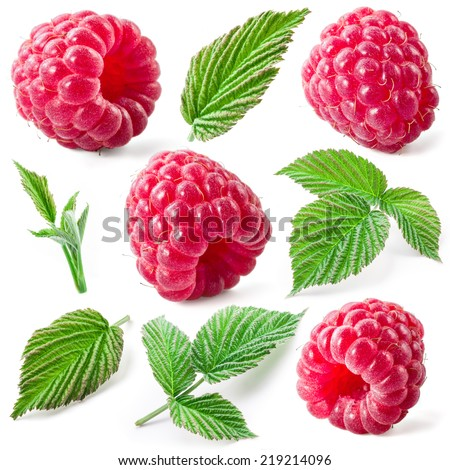 Raspberry and leaves isolated. Collection - stock photo