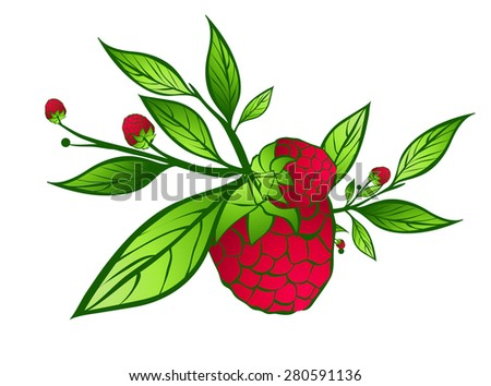 Raspberry With Green Leaves Over White Background - stock photo