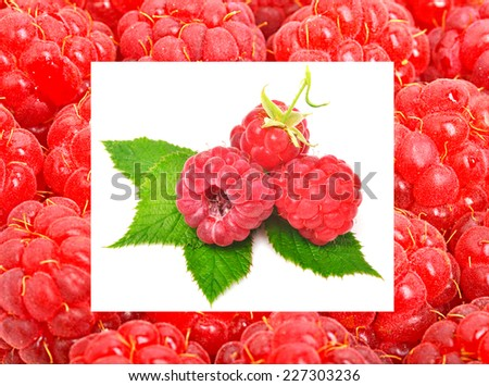 Raspberry with leaves isolated on white. Collage