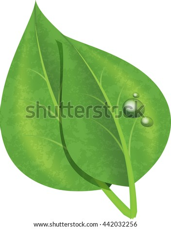Raster copy of isolated green leaves with drops of dew - stock photo