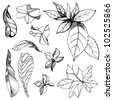 RASTER Set of floral design elements - plant leafs - stock photo