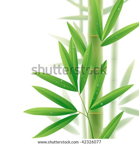 Raster version of vector image of green bamboo leaves on a white background