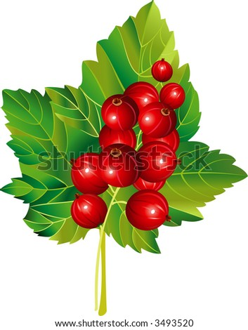 Raster version of vector image of red currant - stock photo