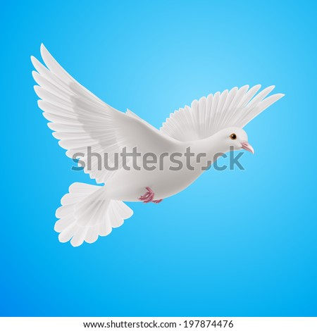 Raster version. Realistic white dove on blue sky background. Symbol of peace
