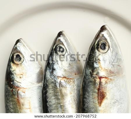 Rastrelligers  on white plate. - stock photo