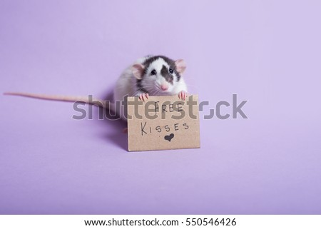 Rat holding sign free kisses. Rat with cardboard sing. Valentine's day. Valentines day background. Dumbo rat.