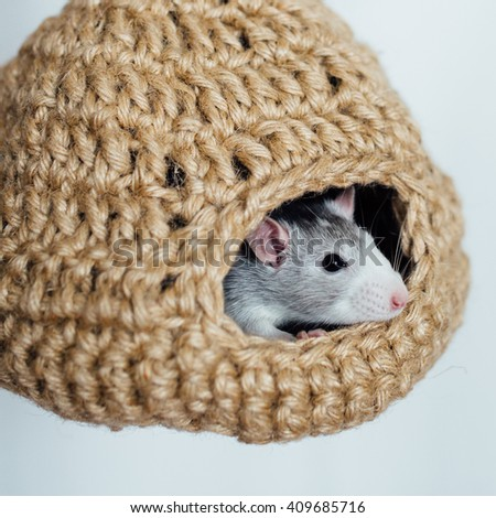 Rat inside Hanging Hut, Hidey for Rat, Hamster, Chinchilla, Guinea Pig. Small animal bed. Handmade of natural Jute. Igloo Cuddle House, Pet supplies - stock photo