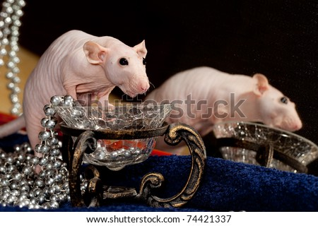 Rat, necklace and mirror - stock photo