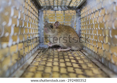 Rat trap, Background of feel the fear, Feeling of blur background. - stock photo
