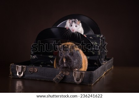 Rats and guinea pigs on a retro background - stock photo