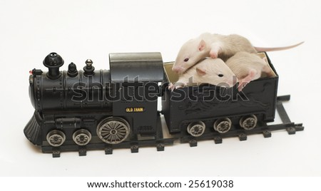 rats and train - stock photo
