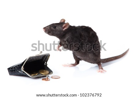 rats isolated. a rat with a purse - stock photo