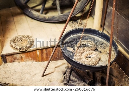 Rattle Snakes In The Western American Miners Town.  - stock photo