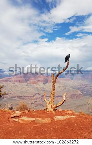 Raven - guard of the Grand canyon, Arizona, USA - stock photo